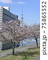 平井旧中川の風景 75865552