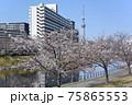 平井旧中川の風景 75865553