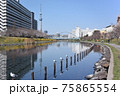 平井旧中川の風景 75865554