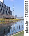 平井旧中川の風景 75865555