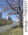 平井旧中川の風景 75865557
