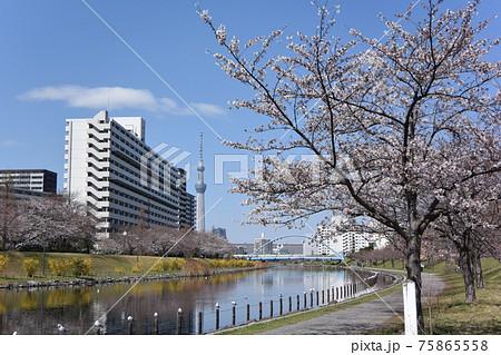 平井旧中川の風景 75865558