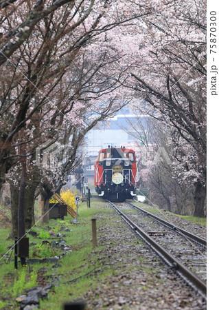 嵯峨野トロッコ列車 桜のトンネル 75870300
