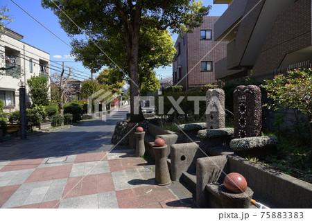 3月 世田谷799ムスカリ・ヒガンバナ科・用賀プロムナード・いらか道 75883383