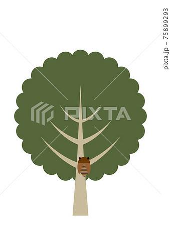 蝉がとまってる木のイラスト 75899293