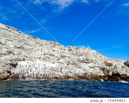 白い岩と青い空・海が美しいケープペンギン(アフリカペンギン)の楽園 セントクロア島(南アフリカ) 75899801