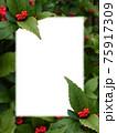白色コピースペースのある赤い実のセンリョウ 75917309