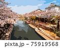 福岡県柳川市乗船場の桜 75919568