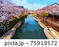 福岡県柳川市乗船場の桜 75919572