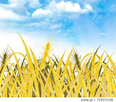 麦畑 水彩イラスト 75923106