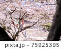 春の陽気で桜が満開だと、自粛すべきとは理解していても、外に出て春を感じたくなります。 75925395