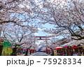 桜と青空 75928334