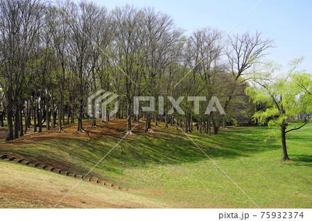 3月 小金井172若芽の芽吹き・武蔵野公園 75932374