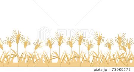 麦畑 線無し 75939575