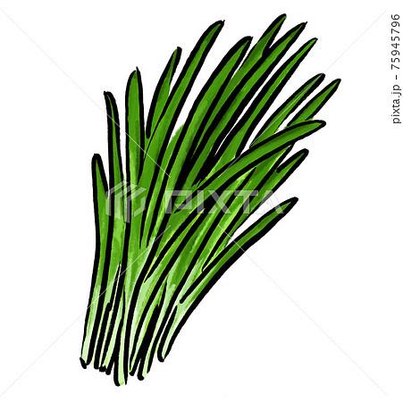 ニラ 韮 野菜 イラスト 75945796