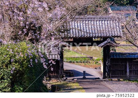 【静岡県】江川家菩提寺の本立寺 桜の季節 75952522