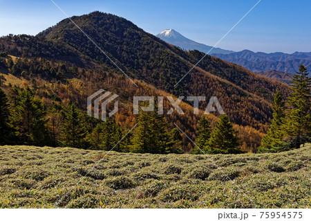 大菩薩連嶺・石丸峠の草原と小金沢山・富士山の眺め 75954575