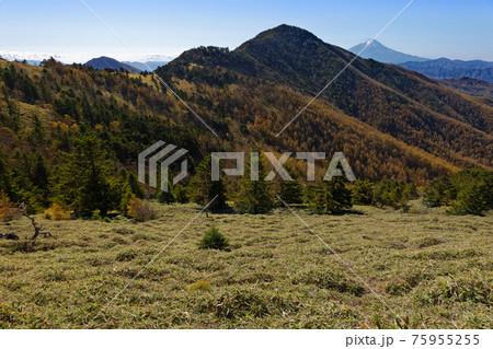 大菩薩連嶺・石丸峠の草原と小金沢山・富士山の眺め 75955255