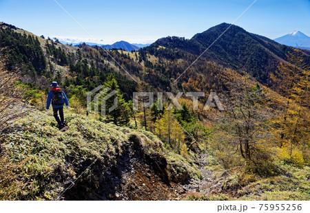 大菩薩連嶺・石丸峠へ向かう登山者と小金沢山・富士山の眺め 75955256