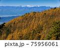 大菩薩連嶺・石丸峠からカラマツの黄葉と白峰三山 75956061