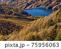 大菩薩連嶺・石丸峠の巻道から見る大菩薩湖とカラマツの黄葉 75956063