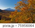 大菩薩連嶺・熊沢山の紅葉と富士山 75956064