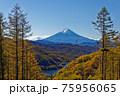 大菩薩連嶺・上日川峠付近の紅葉と大菩薩湖・富士山 75956065
