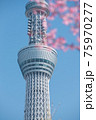春の東京の風景 スカイツリーと桜 75970277