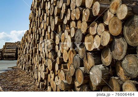木材置き場 76006464