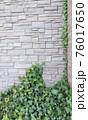壁に這うツタ植物 76017650