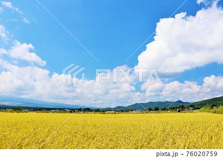 秋の青空と田んぼ風景 76020759