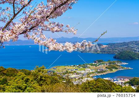 八人ヶ岳公園の桜 【長崎県西海市】 76035714