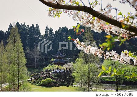 春の冠岳花川砂防公園 桜と望嶽亭 76037699