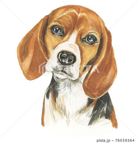 ビーグル犬 【手描き水彩画】 76039364