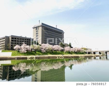 水鏡に映る乙川の桜並木(愛知県岡崎市) 76056917