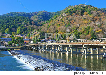 【京都府】満開の桜と嵐山渡月橋 76058891