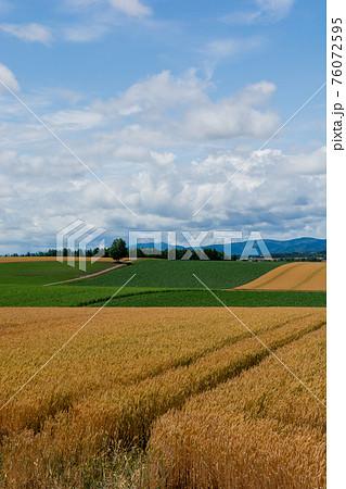Golden wheat field in summer hilly area 76072595