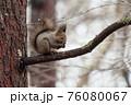 エゾリス 木の上 76080067