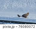 オジロワシとハシブトガラス 冬 雪 76080072
