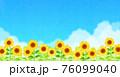 背景素材_ひまわり 青空 76099040