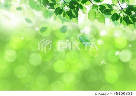 風に舞う新緑(アブストラクト) 76100851