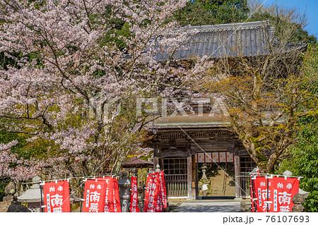 桜が満開の城崎温泉 温泉寺 76107693