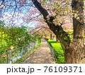 桜の木と川沿いの一本道をクローズアップした街並みの風景 76109371