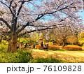 一本の桜の木と公園で遊ぶ子供達の後ろ姿が見える風景 76109828