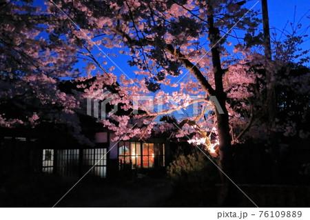 夜桜と雛飾りの日本らしい春の夜の風景 76109889