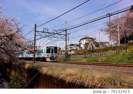 石神井川沿いにある春の桜並木を通過する下り電車(2) 76132423