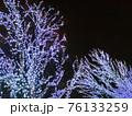 樹木のLEDイルミネーション1 76133259