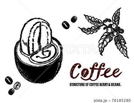 コーヒーチェリーとコーヒー豆のイラスト。コーヒーチェリーの中身。 76185280