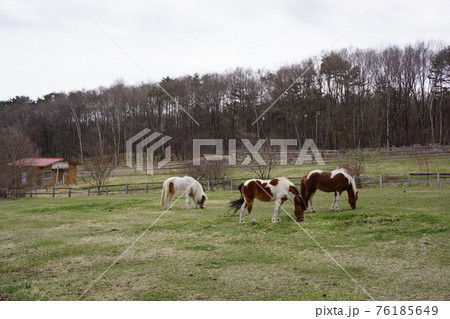 山梨県の清里の牧場通りの牧場風景 76185649