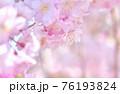 しだれ桜 背景素材 76193824